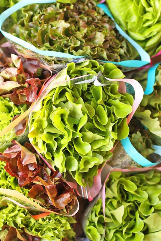 Several heads of butter leaf lettuce