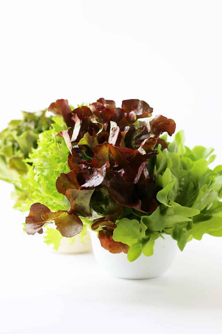 Fresh heads of lettuce in white bowls